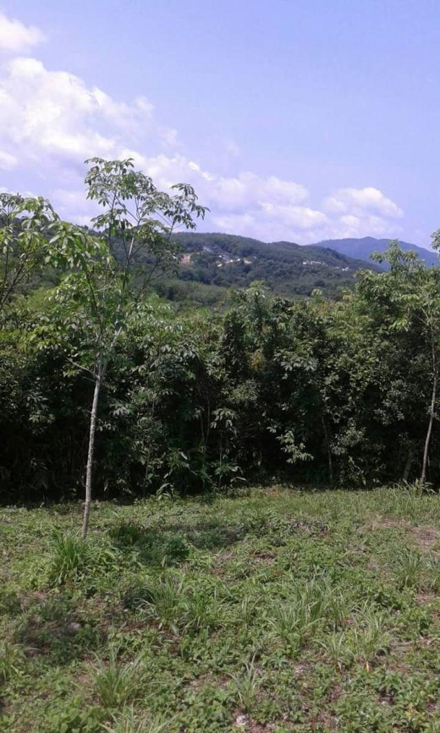 ขายที่ดินถลางในซ.ลายัน 7 ถลาง ภูเก็ต เนื้อที่ 4 ไร่เศษ ขาย 4 ล้านไร่