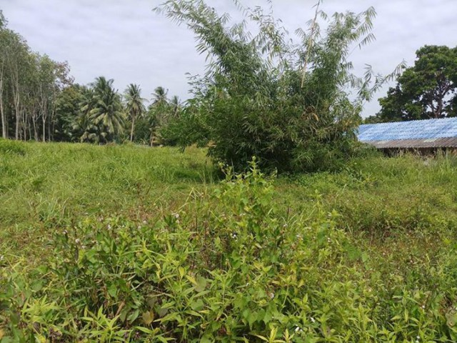 ขายที่ดินถลางหน้าติดถนนทางหลวงบ้านผักฉีด-บ้านยามู เนื้อที่ 1.2 ไร่ ขาย 8.5 ล้าน
