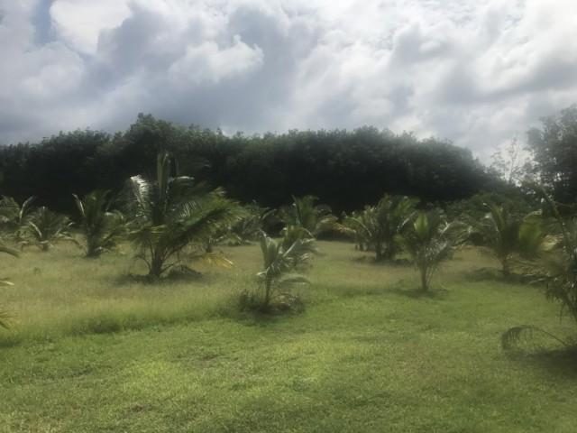 ขายที่ดินพังงาเป็นสวนมะพร้าวน้ำหอม หล่อยูง เนิ้อที่ 16 ไร่เศษ ขายเหมา 28 ล้าน