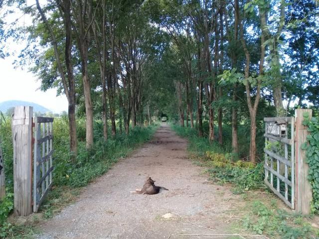 ขายที่ดินสวนมะขามพลับพลาไชย ต.อู่ทอง สุพรรณบุรี เนื้อที่ 4 ไร่ ขายเหมา 1.2 ล้าน
