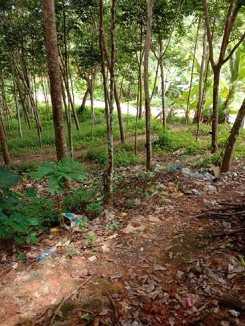ขายที่ดินพร้อมสวนยางพังงา ท่าอยู่ ตะกั่วทุ่ง เนิ้อที่ 55 ไร่ ขาย 6 แสนต่อไร่